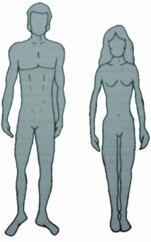Ectomorph body types for the male and female.
